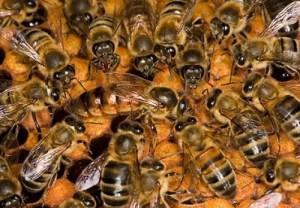 bees-e1302030716482