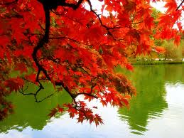 falling+leaves