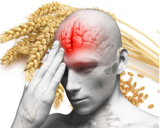 grain_brain_blood_flow-e1444787227659
